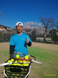 桜&テニス